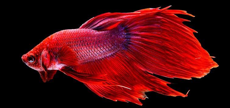 معلومات عن سمك الفايتر