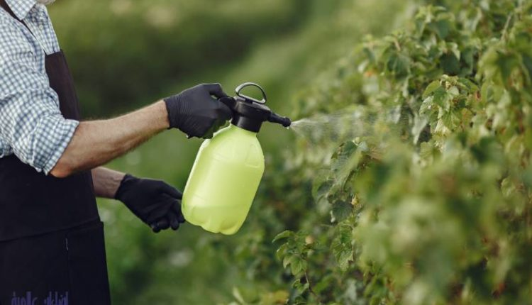 مكافحة حشرات النباتات المنزلية