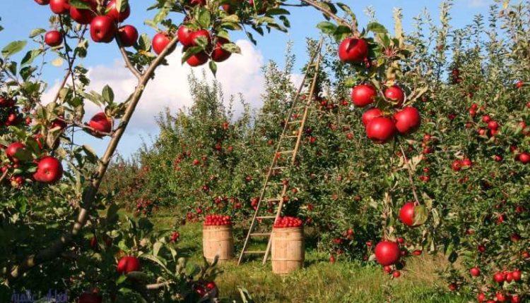 أهمية البوتاسيوم للنبات