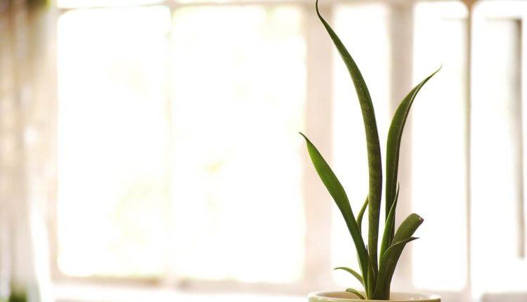 نباتات منزلية لا تحتاج للشمس