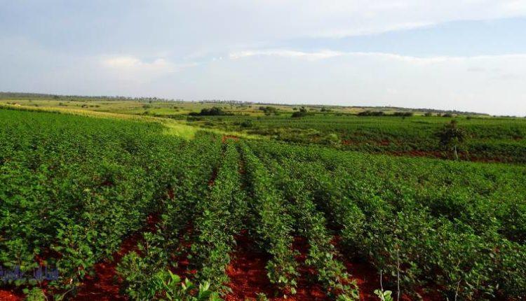أهمية التربة الحمراء للزراعة