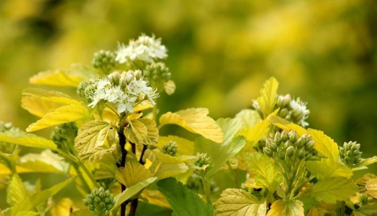 علاج اصفرار أوراق نباتات الزينة
