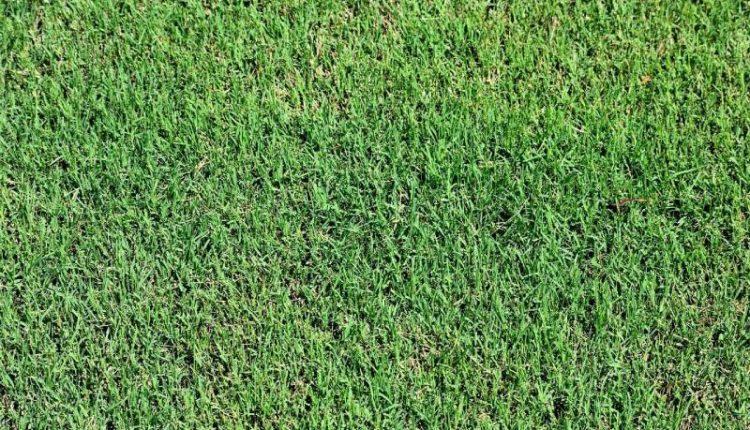 طريقة زراعة العشب الطبيعي