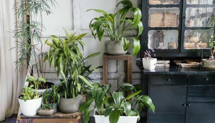 علاج ذبول النباتات المنزلية