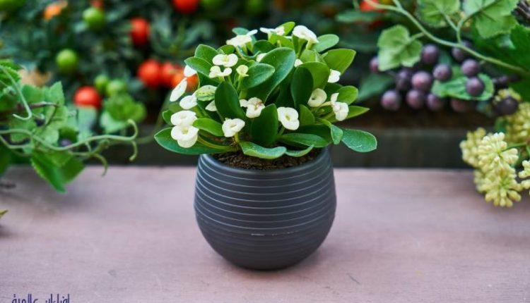 كيفية العناية بالنباتات المنزلية