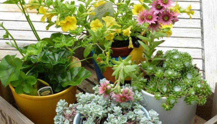 كيفية تغذية النباتات المنزلية