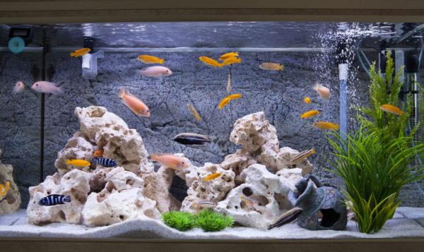 هل يجب إطفاء ضوء حوض السمك