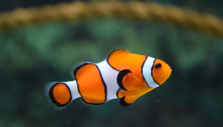 كيف أعرف أن سمك الزينة جائع