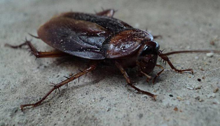 أنواع الحشرات الزاحفة المنزلية