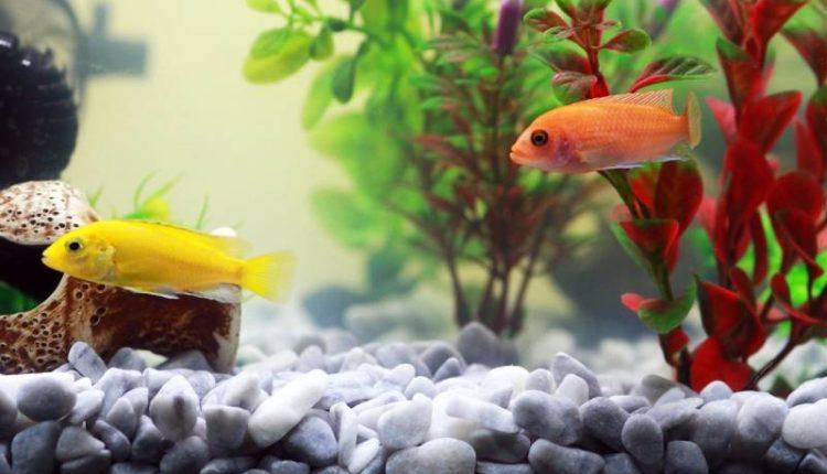 مدة تشغيل مضخة الهواء في حوض السمك