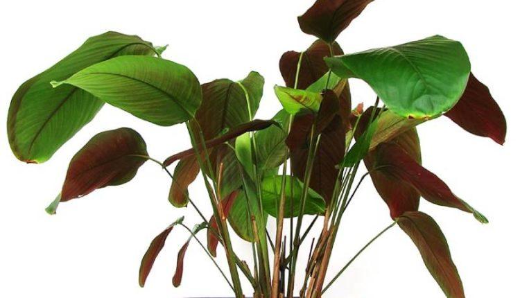 أسباب التفاف أوراق النباتات الداخلية