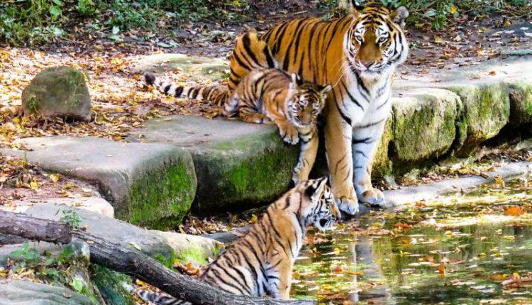 أكبر 10 حدائق حيوانات في العالم