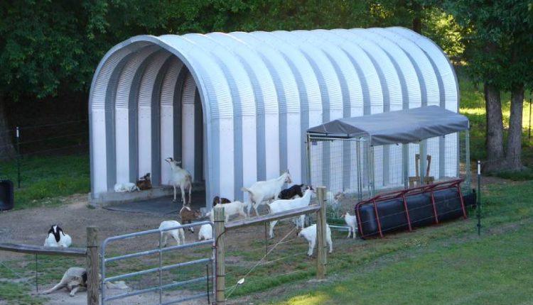 تربية الماعز