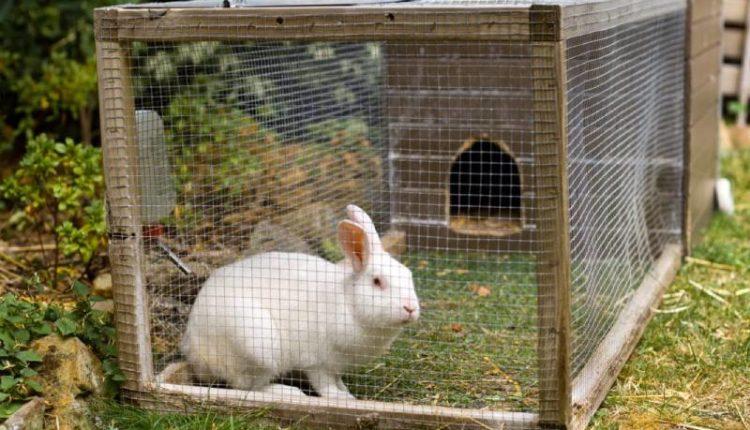 معلومات عن الأرانب وتربيتها