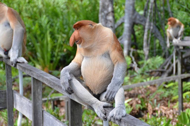 12 من أشهر وأذكى أنواع القرود