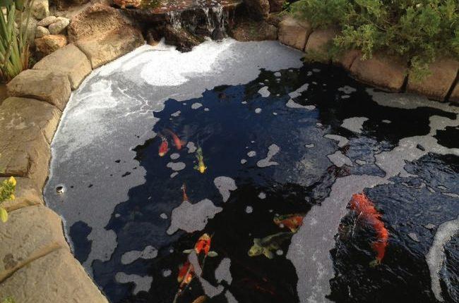 ظهور فقاعات في حوض السمك